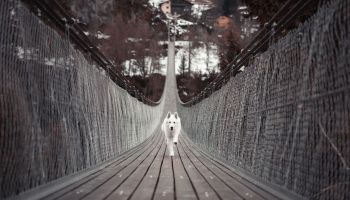Traveling With Your Dog Blog