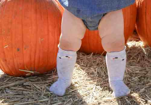 Pumpkin Patch 2016|Ahrens at Home