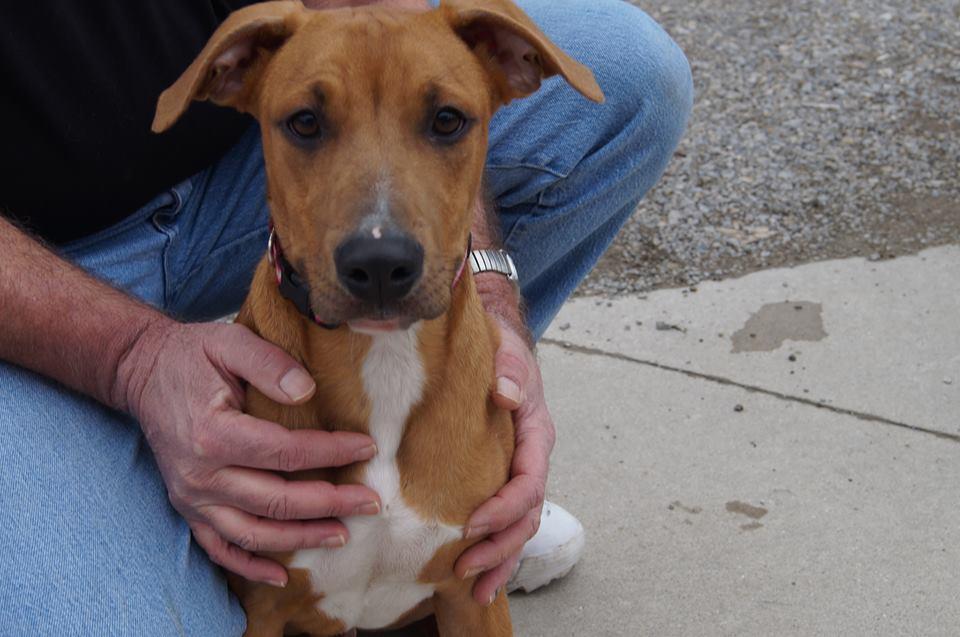 United Dog Rescue Inc