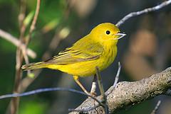 Bird Watching @ Yurt Deck | Circleville | West Virginia | United States