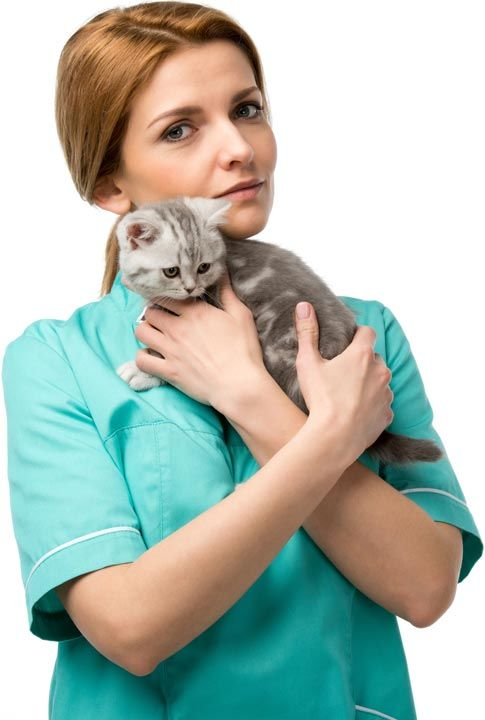 24 Hour Vet After Hours Veterinary Emergency Clinic