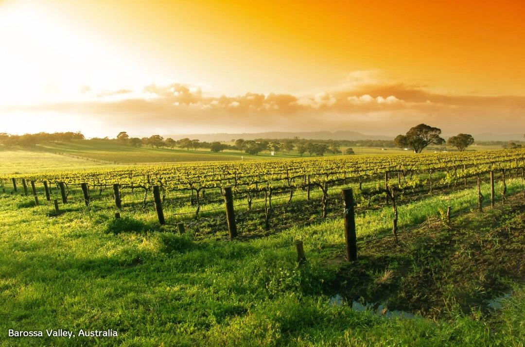 barossaValley-Australia