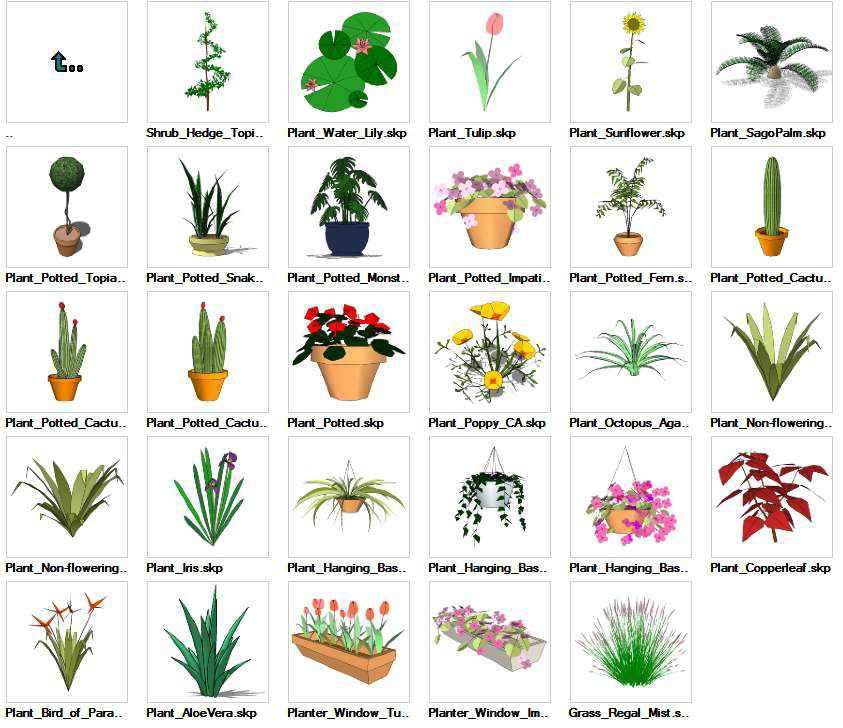 Sketchup Ornamentals Plant 3D models download