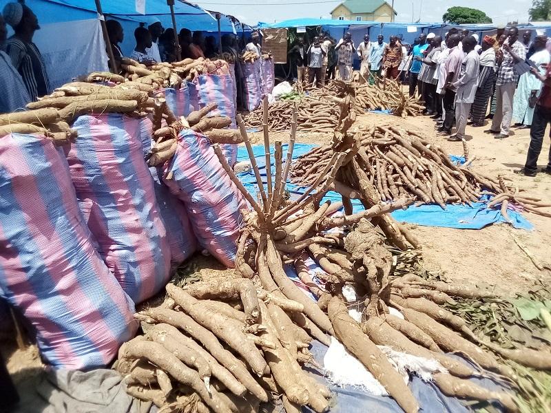 Festival des tubercules de Bittou, édition  2021 : Le manioc magnifié dans toutes ses vertus