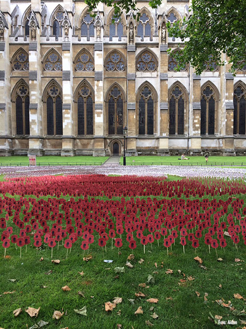 Poppies - Mohnblumen, Westminster Abbey