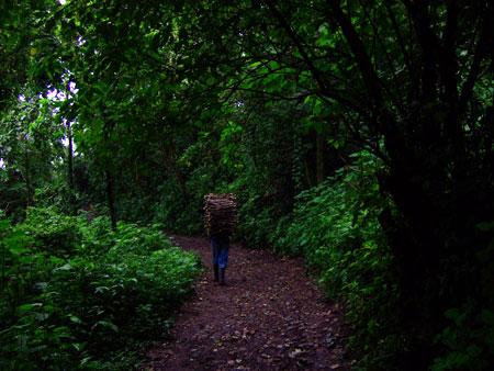 Gathering Firewood, Guatemala