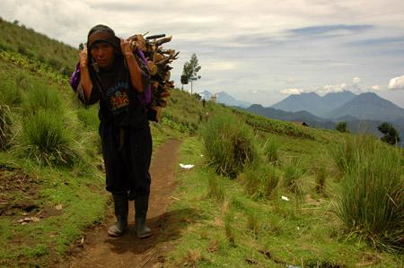 Gathering Wood, Deborah Coleman (2006)