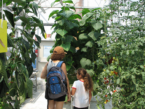 Science Barge: In the greenhouse, a mother and daughter look at the hydroponic cucumber plants
