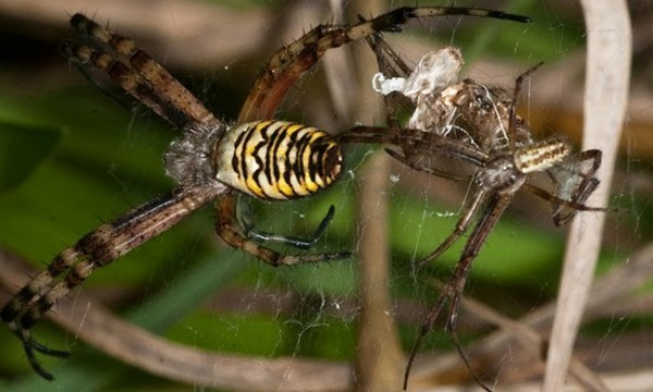 spider-600x360