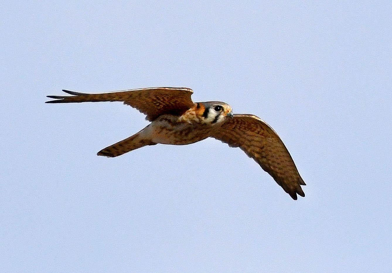 Field Trip Reports Aiken Audubon Society