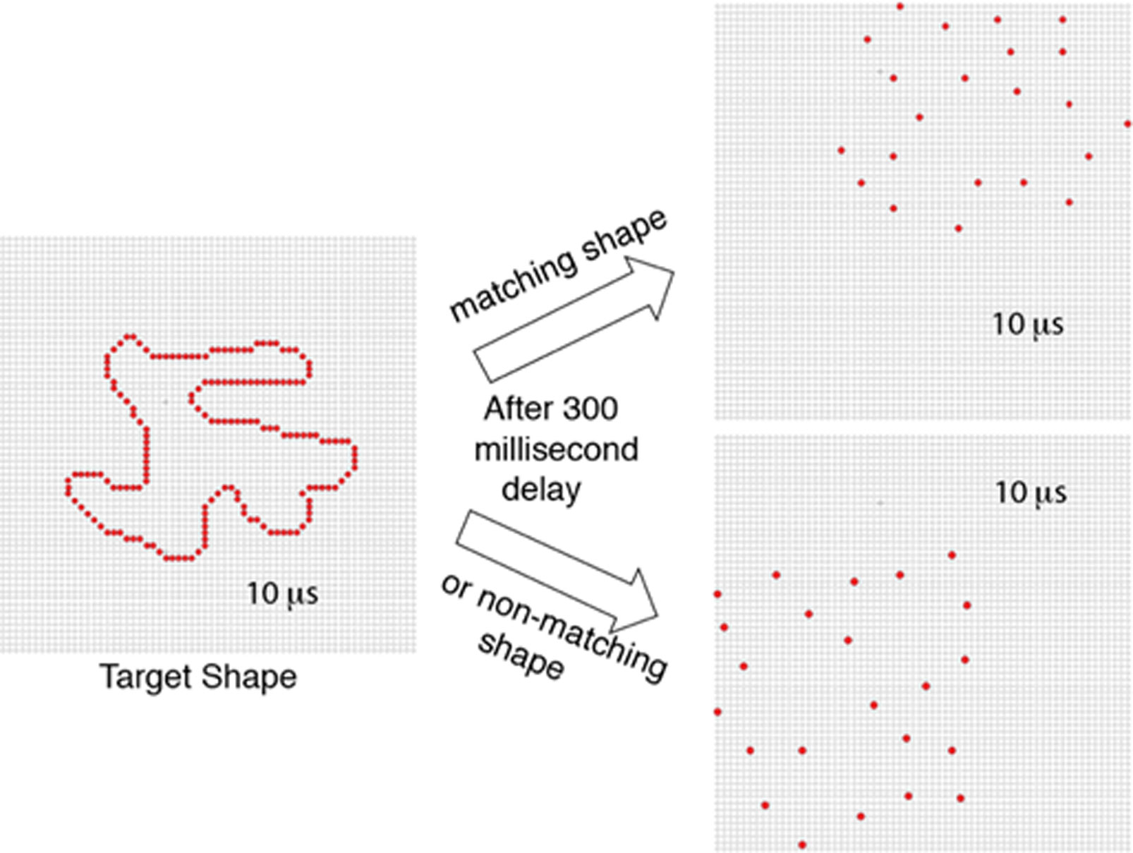 Visual Encoding Of Partial Unknown Shape Boundaries