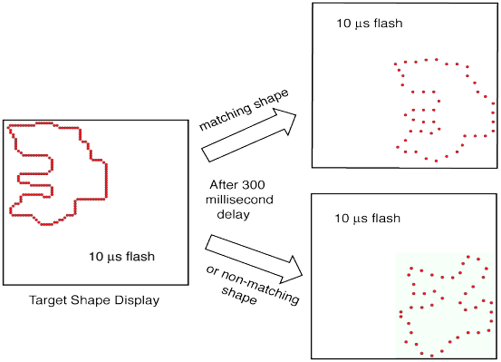 New Encoding Concepts For Shape Recognition Are Needed