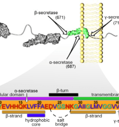 figure 1 app processing and subsequent a amino acid sequence with specific domains of interest specified proteolytic cleavage of app is initiated at  [ 1690 x 883 Pixel ]