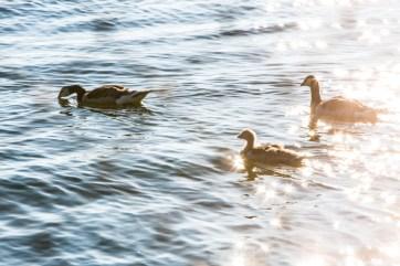 Kotisivut Baltic Sea_Aino Huotari (7 of 9)