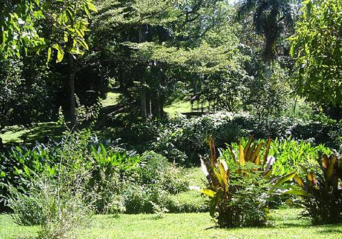 Jardin Botanique De Pamplemousses Association Of Inbound