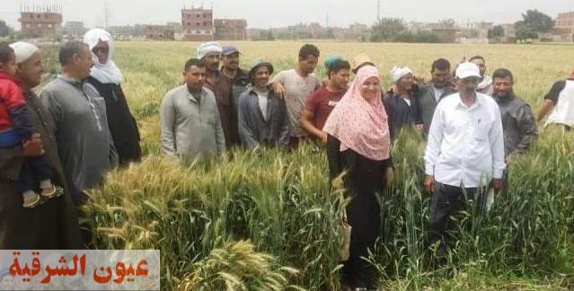 زراعة الشرقية تنفذ مدرسة حقلية إرشادية لمزارعي قرية أم الزين بمركز الزقازيق