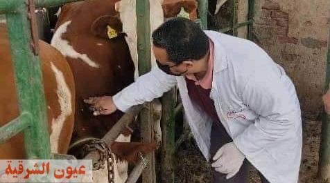 بيطري الشرقية : فحص 1549 رأس ماشية ضد البروسيلا و السل البقري خلال شهر أبريل الماضي