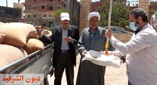 السنابل الذهبية تتربع عرش الصدارة بمحافظة الشرقية