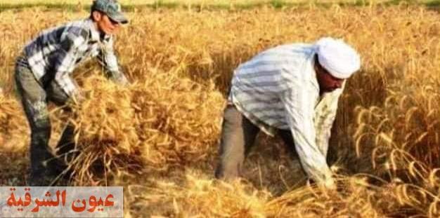 محافظ الشرقية : الإنتهاء من حصاد جميع الأفدنة المزروعة قمح هذا العام