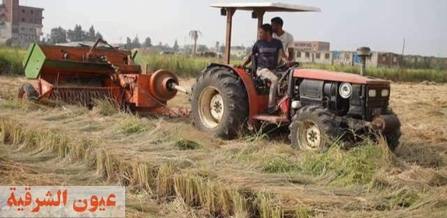 وكيل وزارة الزراعة بالشرقية : حصاد 175 ألف و 910 فدان أرز وكبس..وتجميع 170 ألف و 403 طن قش منذ بدء موسم حصاد الأرز