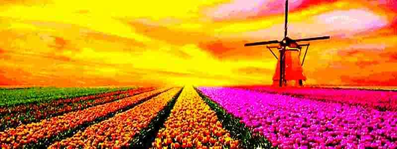 Kriptovaliutų manija - tai skaitmeninė Tulpių manija?