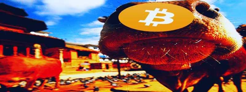 """Kriptorinkų apžvalga 2019-07-03. Bitcoin įlipo į karvės """"pyragą"""""""
