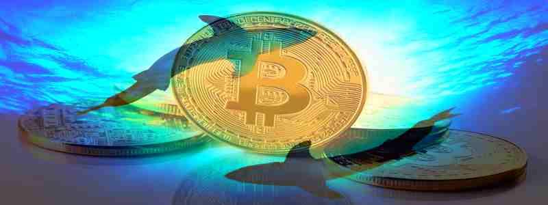 Kriptorinkų apžvalga 2020-02-11. Fiat bitcoin suvalgys