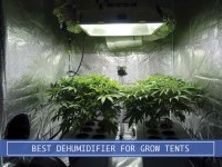 Best Dehumidifier for Grow Tents and Plants Review from Amazon