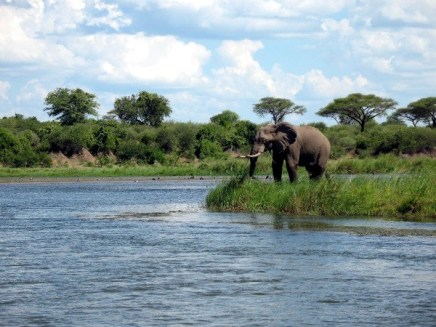 Elephant on Zambezi River