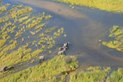 Okavango River - Elephant Trek