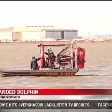 Dolphin stranded near San Francisco Airport