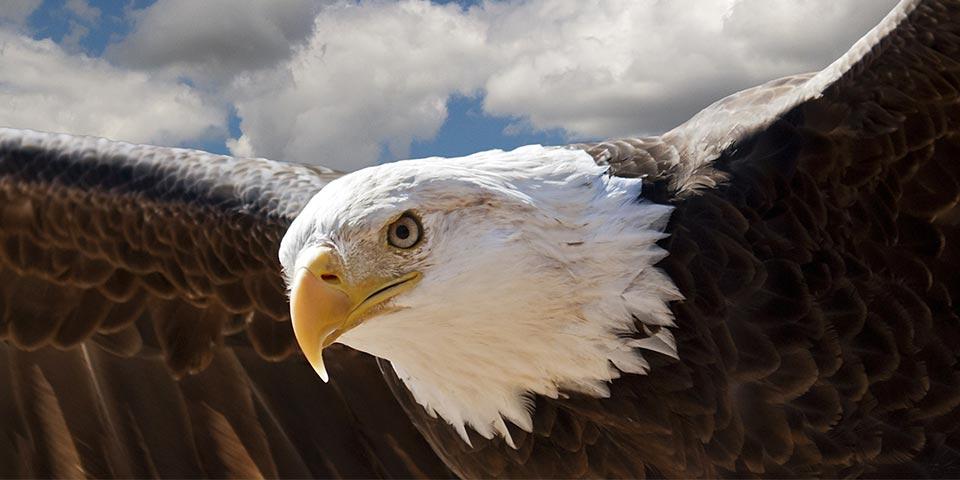 everglades birds 01