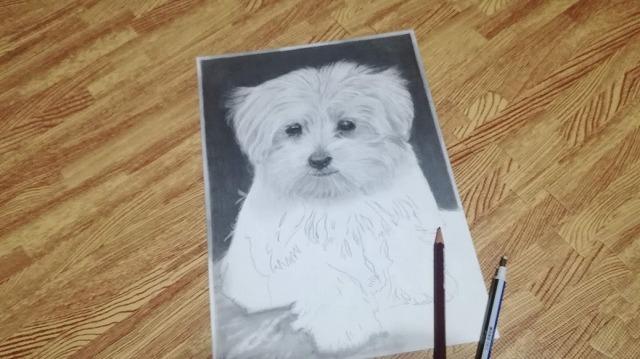 鉛筆画『子犬』