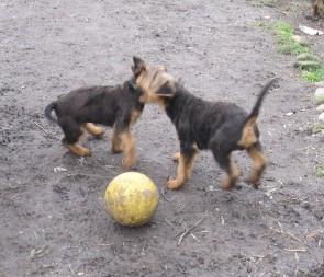 Wer bekommt den Ball ?
