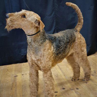 XIETA v.d.Seeworth,  bester Hund der Rasse, BOB, siehe auch NEWS