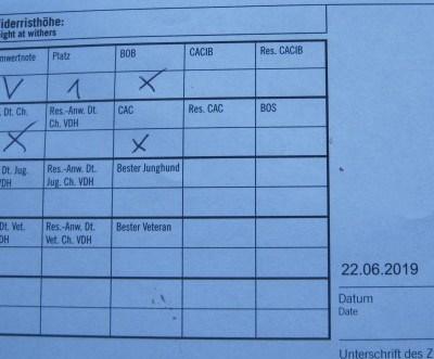 Bewertung, XIETA, VDH-Ausst. SchlossMeissdorf, Sachsenanhalt