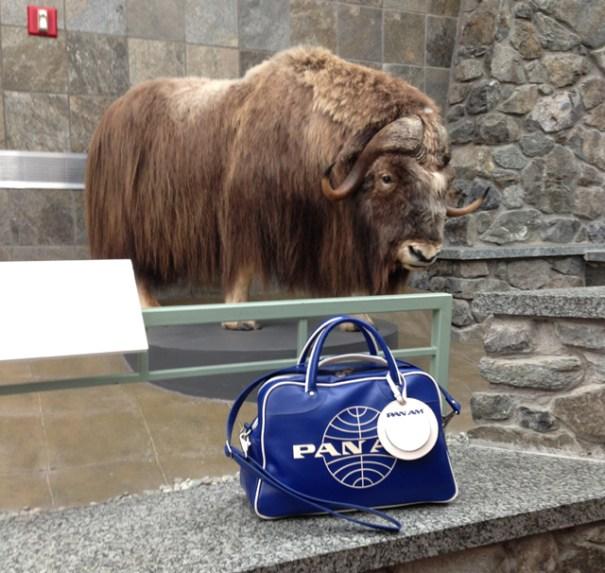Mooooov'n on up in Alaska - Photo: Bag's Human