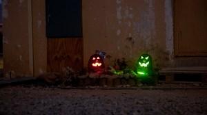 Pumpkins in Afghanistan