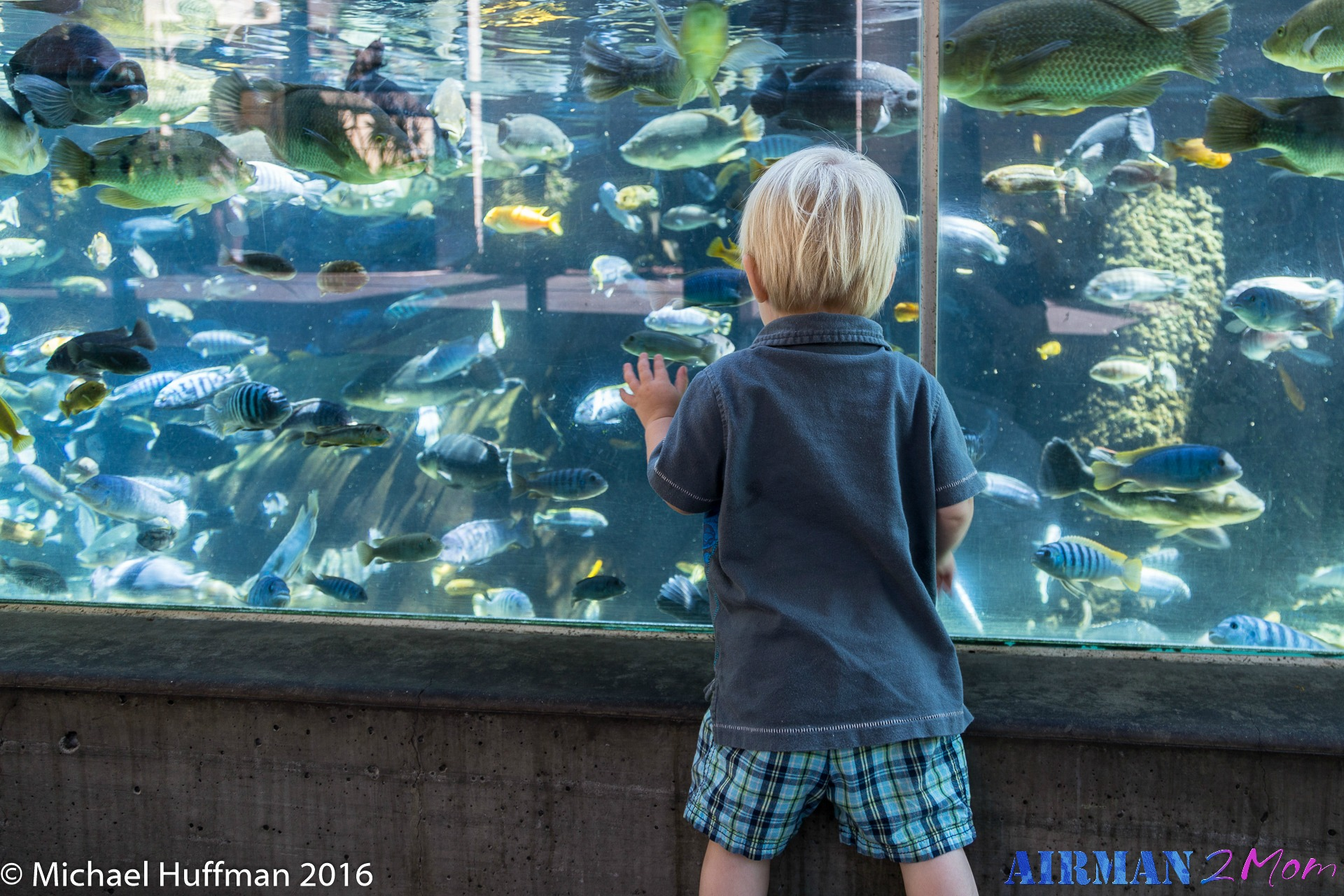 Day 27 A Day Of Fun At The San Diego Zoo Airman To Mom