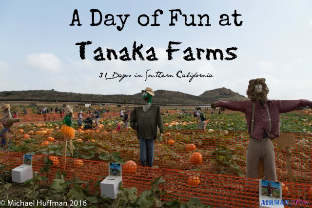 No matter when you go to Tanaka Farms it is sure to be a fun day, but I would highly recommend their pumpkin patch.