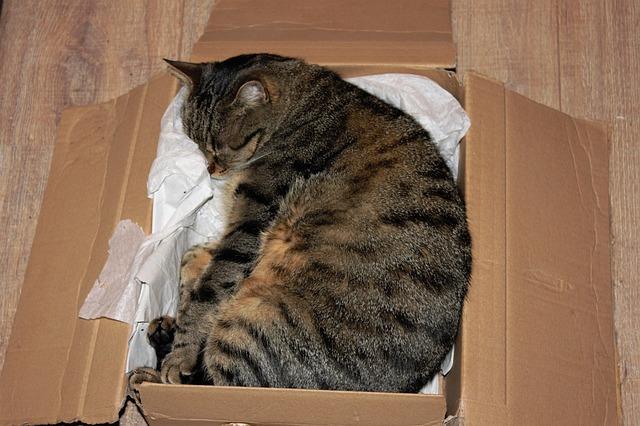 déménagement entre particulier aide déménagement service déménagement