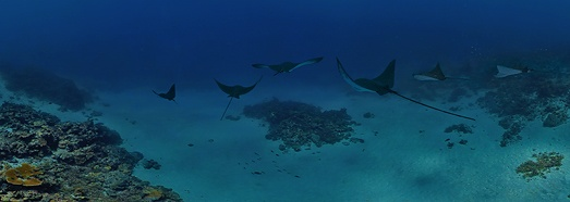Underwater Maldives. Stingrays - AirPano.com • 360 Degree Aerial Panorama • 3D Virtual Tours Around the World