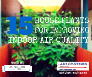 house-plants-improve-indoor-air-quality
