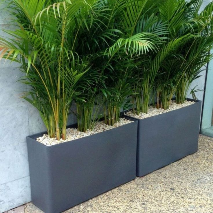 backyard privacy wall ideas pictures