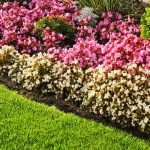 50 Great Garden Edging Ideas For Your Backyard Plants And Diy Designs