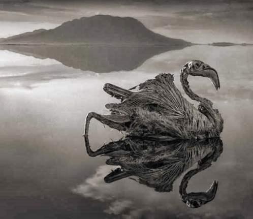 Lake Natron, Hindi, Mystery, History, Story, Kahani, Itihas,