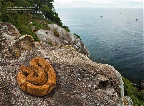 Snake Island of Brazil History, Story & Information in Hindi