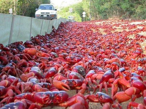Crabs Island History, Story & Information in Hindi