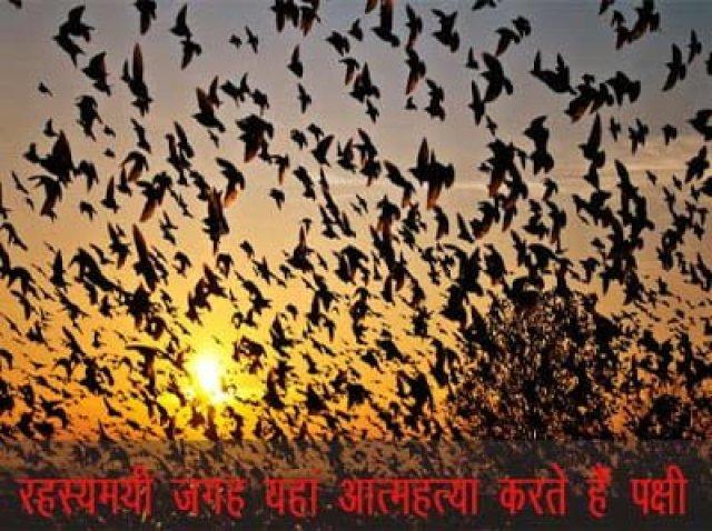 Mysterious Jatinga Valley History In Hindi