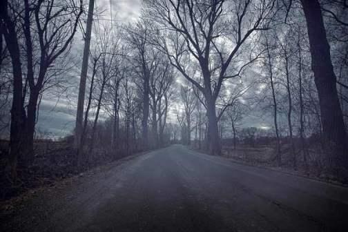 Haunted Sathyamangalam wildlife sanctuary corridor